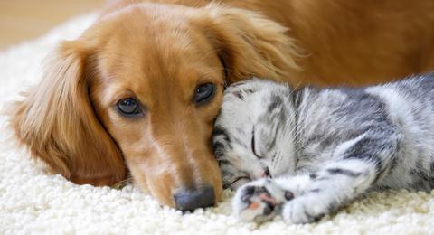 犬猫うさぎの去勢・避妊手術