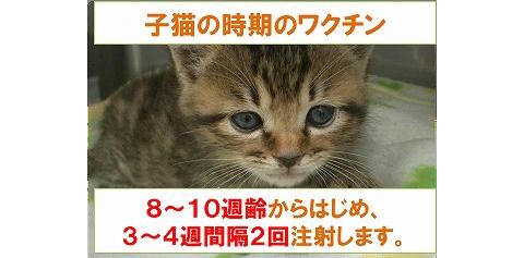 子猫の時期のワクチン